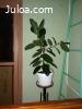 Продам комнатные растениия